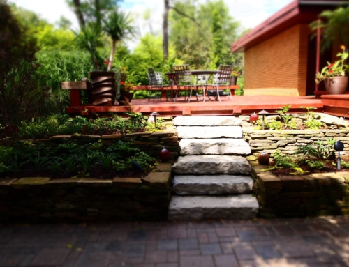 5 Budget Friendly Ways to Make Your Backyard Look Bigger